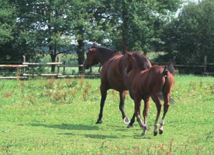 jongepaarden